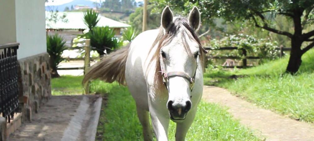 Las esperanzas de vida para el equino eran muy reducidas, pero el vínculo que se creó con Amalia, su cuidadora, cambió favorablemente la historia de la yegua