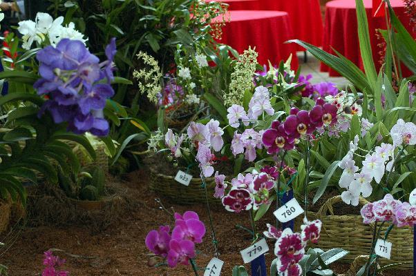 La mayoría de las especies de orquídeas se dan climas tropicales y subtropicales, como Colombia, Brasil, Nueva Guinea, para mencionar algunas.
